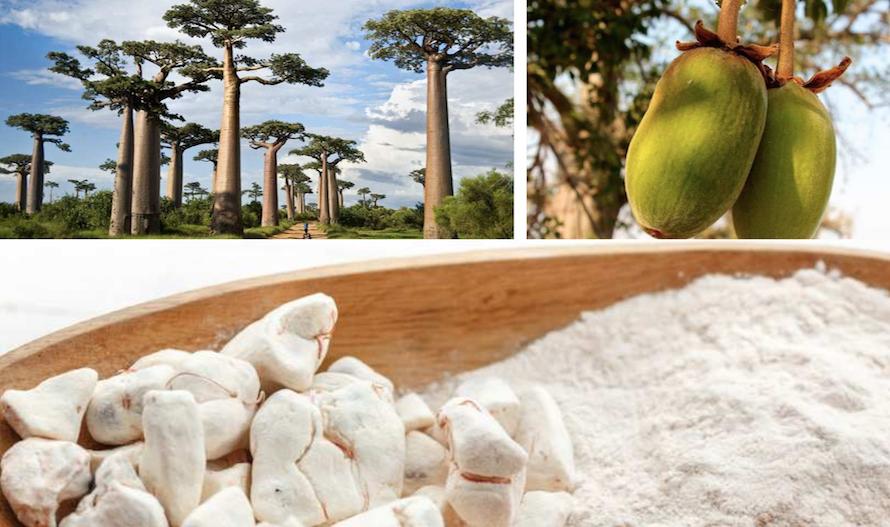 fruit-du-baobab